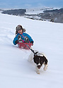 17/01/16<br /> <br /> Freya Kirkpatrick (8) finds an easy way to drag her sledge back up hill by getting a tow from her 15 month old springer spaniel, Chester, as they play in the snow near Buxton in the Derbyshire Peak District.<br /> <br /> All Rights Reserved: F Stop Press Ltd. +44(0)1335 418365   +44 (0)7765 242650 www.fstoppress.com