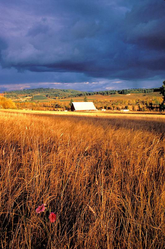 F00056.tif   Barn and petunia. Near Monroe, Oregon