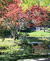 Stock photo: Tree with red fall leaves near a beautiful pond in the Gibbs garden of Georgia USA.