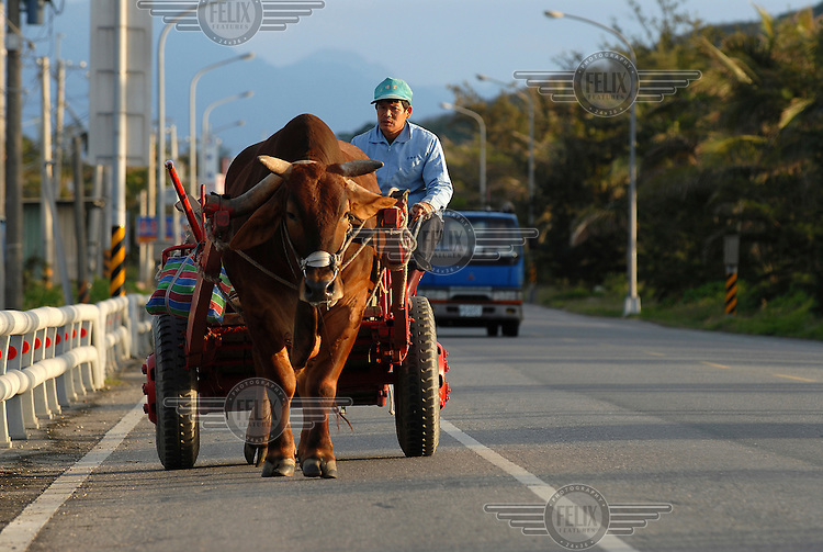 Farmer and his bullock cart on the coastal highway, just north of Taitung City.