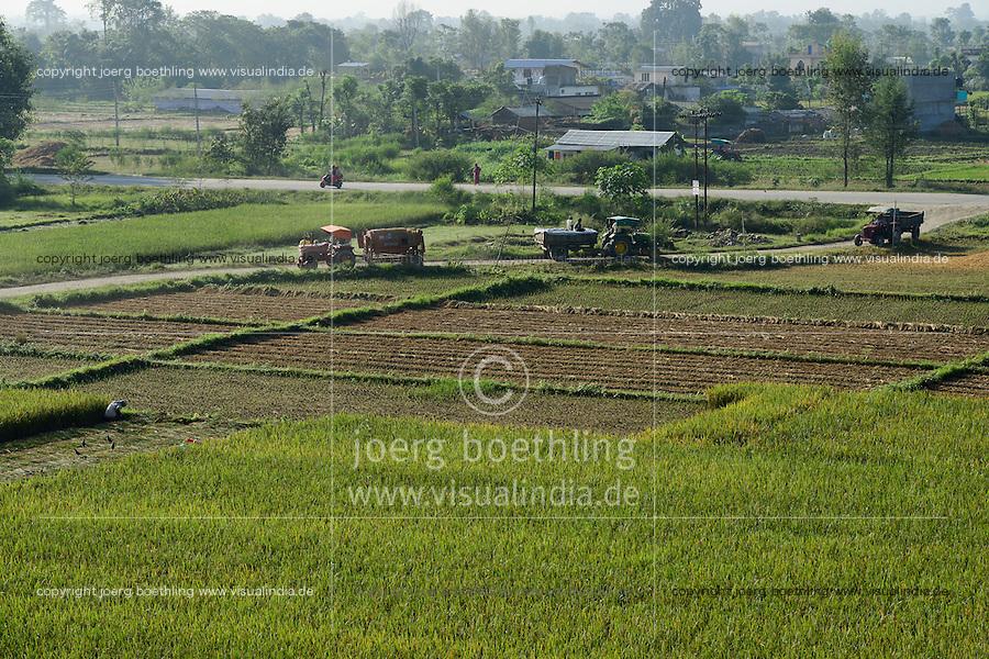 NEPAL, Terai, Tandi, the Terai is the grain basket of the country, rice farming, harvest / NEPAL, Terai, Tandi, das Terai ist die Kornkammer Nepals, Reisernte