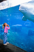 beluga whale, or white whale, Delphinapterus leucas, and girl, Mystic, Connecticut, USA (c) MR