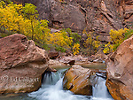 Cottonwoods, Virgin River, Zion National Park, Utah