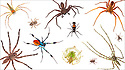 Assorted spiders photographed in mobile field studio on a white background in the centre of Maliau Basin, Sabah's 'Lost World', Borneo, Malaysia. Digital composite.