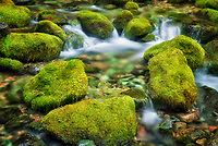 Moss covered rocks in small stream at Opal Creek Scenic Recreation Area, Oregon
