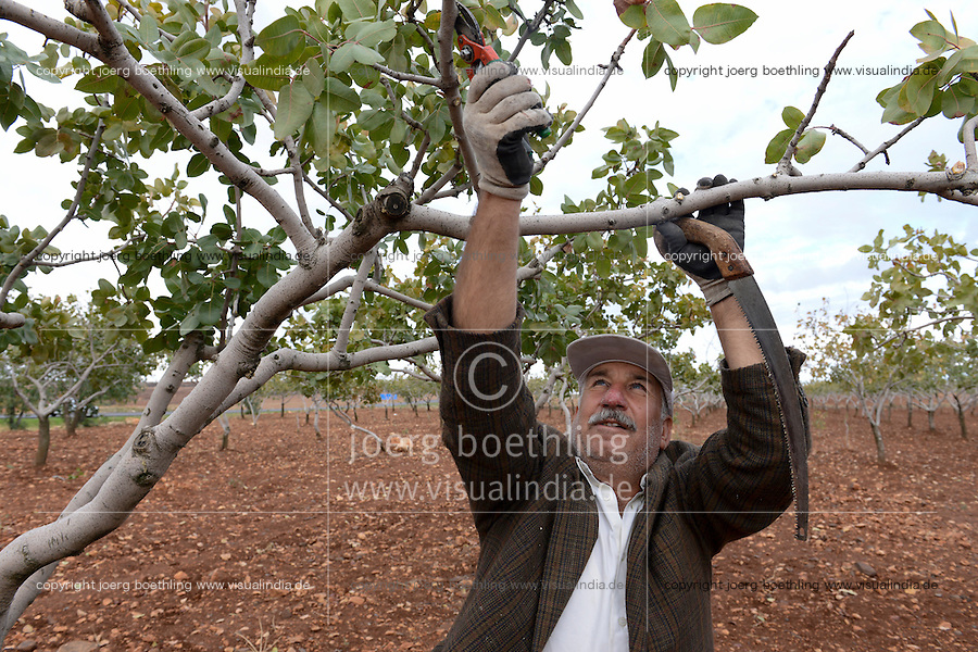 TURKEY, Nizip, farmer cut branches of pistachio trees after harvest / TUERKEI, Nizip, Farmer beschneidet Pistazienbaeume nach der Ernte
