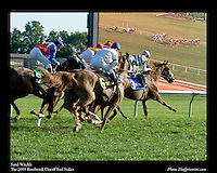As seen in the Arabian Horse Galleries exhibit at The Kentucky Horse Park<br /> <br /> Sand Witchh.The Rosebrook Distaff Turf Stakes