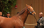 10  November  2009 Keeneland November Sale.   Hip #148 Azeri, consigned by Hill n'Dale farm, owned by the Allen Paulson Trust Fund was sold for 2,250,000 to Shadai Farm in Japan.   Azeri, who is in foal to Distorted Humor, is a Multiple Graded Stakes winner, Eclipse award winner, Horse of the Year, and has earnings of $4,079,820.  She has 3 foals in the U.S. The oldest a 2 year old who is still unraced.