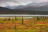 Blueberry plants on the tundra turn orange, Susitna River and Alaska Range mountains along the Denali highway, Interior, Alaska.
