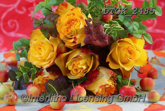 Gisela, FLOWERS, BLUMEN, FLORES, photos+++++,DTGK2485,#f#, EVERYDAY