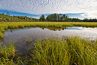 Morning sky and cloud pattern, small tundra pond near Delta Junction, Alaska.