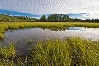 Morning sky and cloud pattern, small tundra pond near Delta Junction, Alaska.