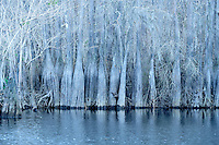 Dead Lakes - Near Marianne, Florida.<br />