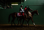 ARCADIA, CA - MARCH 10: Bolt d'Oro #1, ridden by Javier Castellano walks to the track for the San Felipe Stakes at Santa Anita Park on March 10, 2018 in Arcadia, California. (Photo by Alex Evers/Eclipse Sportswire/Getty Images)