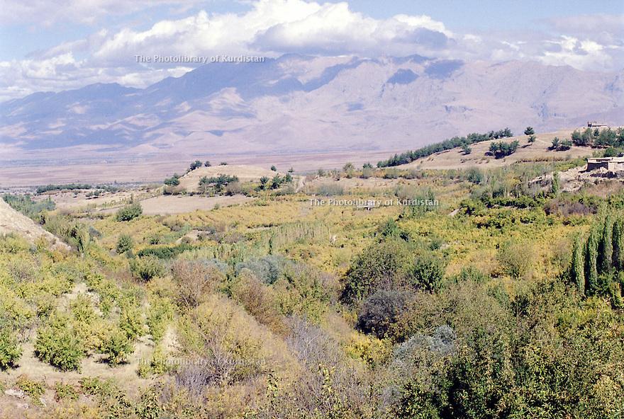 Irak 2000.Jardins d'arbres fruitiers autour de Halabja.   Iraq 2000.Fruit gardens near Halabja