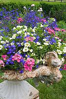 Annual container planter pot of Verbena, Lobelia erinus, Calibrachoa petunias, with rustic feel on lawn