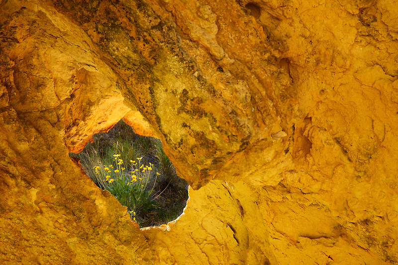 Balsamroot flowers as seen through hole in rock. Leslie Gulch, Oregon