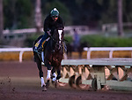 OCT 29: Breeders' Cup Classic entrant Yoshida, trained by William I. Mott, gallops at Santa Anita Park in Arcadia, California on Oct 29, 2019. Evers/Eclipse Sportswire/Breeders' Cup