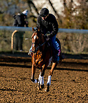November 4, 2020: Spanish Loveaffair, trained by trainer Mark E. Casse, exercises in preparation for the Breeders' Cup Juvenile Fillies Turf at Keeneland Racetrack in Lexington, Kentucky on November 4, 2020. Scott Serio/Eclipse Sportswire/Breeders Cup