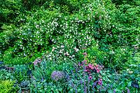 France, Indre-et-Loire, Lémeré, jardins et château du Riveau au printemps, le Jardin des philtres d'amour