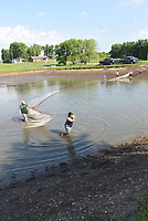 Staff at the Charlie Craig State Fish Hatchery seine a pond to collect walleye fingerlings. Fingerlings are loaded into trucks and transported for stocking at Beaver Lake and other reservoirs.<br />(NWA Democrat-Gazette/Flip Putthoff)