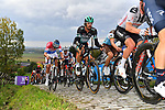 The peloton including Daniel Oss (ITA) Bora-Hansgrohe, Oliver Naesen (BEL) AG2R La Mondiale and Dutch Champion Mathieu Van Der Poel (NED) Alpecin-Fenix on the first ascent of the Paterberg during the Tour of Flanders 2020 running 244km from Antwerp to Oudenaarde, Belgium. 18th October 2020.  <br /> Picture: Serge Waldbillig   Cyclefile<br /> <br /> All photos usage must carry mandatory copyright credit (© Cyclefile   Serge Waldbillig)