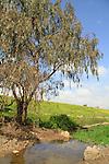 Ein Ha'emir in the Golan Heights