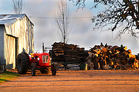A farm with an old red tractor and big piles of fire wood to be chopped up. At sunset strong setting sun light from the right. Montevideo, Uruguay, South America