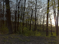 FOREST_LOCATION_90225