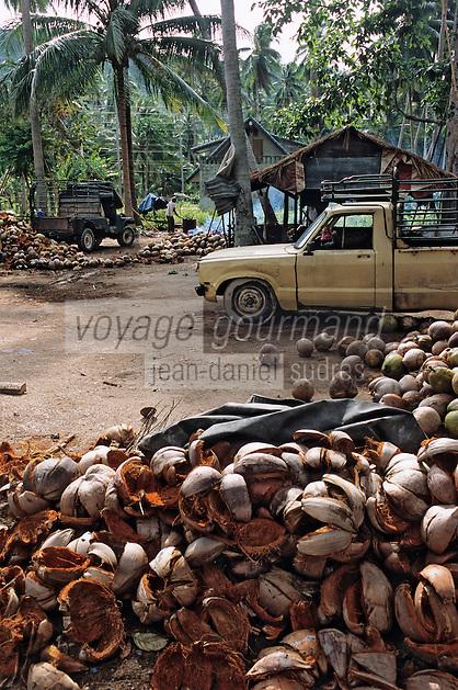 Thaïlande/Ile de Ko Samui/Lipanoi: Exploitation de noix de coco