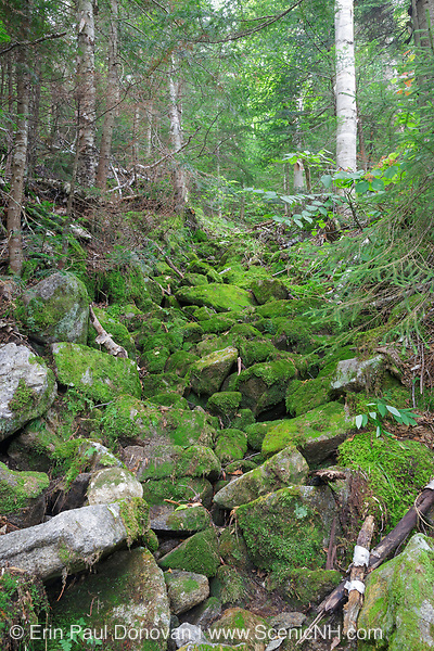 Abandoned sled road along the Gordon Pond Railroad on Mt. Waternomee in Kinsman Notch of the White Mountains, New Hampshire USA. This was a logging railroad in operation from 1907-1916.