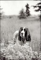 Dog in field<br />