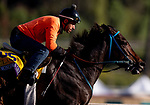 OCT 27: Breeders' Cup Classic entrant Mongolian Groom, trained by Enebish Ganbat, at Santa Anita Park in Arcadia, California on Oct 27, 2019. Evers/Eclipse Sportswire/Breeders' Cup