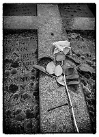 Europe/France/Ile de France/ Paris/75020: Cimetière du père Lachaise : Rose blanche sur sépulture //  Europe / France / Ile de France / Paris / 75020: Père Lachaise cemetery: White rose on grave