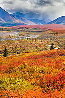 Autumn colored dwarf birch and tundra vegetation covers the region surrounding Savage river at the east end of Denali National park, Alaska.