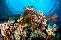 colourful reef, Wakatobi, Indonesia, Pacific Ocean