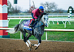November 3, 2020: Knicks Go, trained by trainer Brad Cox, exercises in preparation for the Breeders' Cup Dirt Mile at Keeneland Racetrack in Lexington, Kentucky on November 3, 2020. Jon Durr/Eclipse Sportswire/Breeders Cup