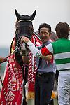 TOKYO,JAPAN-MAY 29:Cryptogram ,ridden by Yuichi Fukunaga,wins the Meguro Kinen at Tokyo Racecourse on May 29,2016 in Fuchu,Tokyo,Japan (Photo by Kaz Ishida/Eclipse Sportswire/Getty Images)