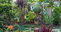 Gardener's path between backyard garden beds, California plant collector garden - Carol Brant