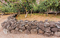 Hawaiian stone wall in  Nualolo Kai village, Na Pali Coast, Kaua'i