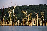 ¡rvores secas no lago da hidrelÈtrica de Balbina<br /> Presidente Figueiredo, Amazonas, Brasil<br /> 12/ 2003<br /> Foto Marcelo Lourenço<br /> <br /> A Usina Hidrelétrica de Balbina está localizada no rio Uatumã (Bacia Amazônica), município brasileiro de Presidente Figueiredo, precisamente no distrito de Balbina, no estado do Amazonas.<br /> <br /> Cada uma das 5 unidades geradoras tem capacidade de geração de até 55 MW de energia elétrica, totalizando 275 MW.<br /> <br /> A usina é criticada por ter um alto custo e ter causado o maior desastre ambiental da história do Brasil.1