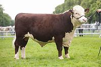 Royal Norfolk Show 2019<br /> ©Tim Scrivener Photographer 07850 303986<br />      ....Covering Agriculture In The UK....