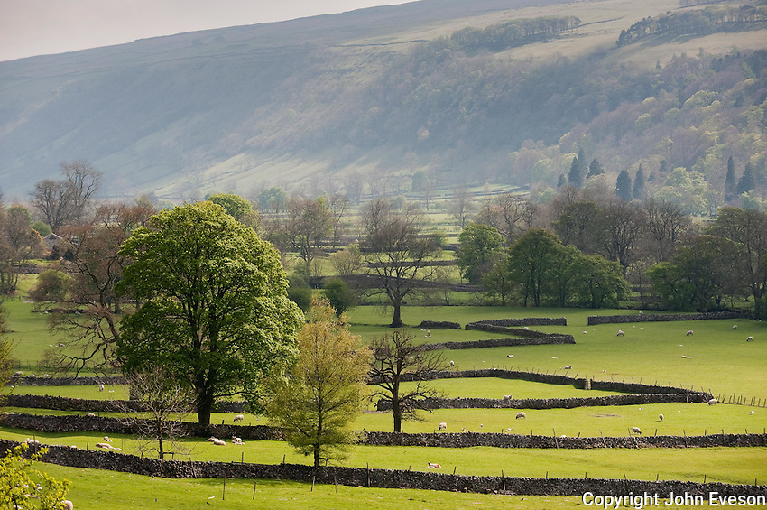 Field, Buckden, North Yorkshire.