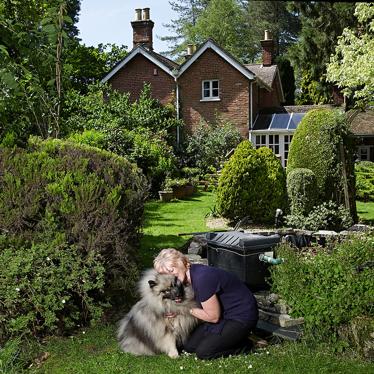 © John Angerson<br /> 140606 - Times magazine - Stud dog feature.<br /> 2 year old Keeshond - Digby Champion Neradmik Handsome Hero with his owner Jean Sharp-Bale. At their home in the New Forest UK.