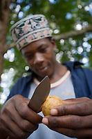 """Afrique/Afrique de l'Est/Tanzanie/Zanzibar/Ile Unguja/env de Stone Town: Abdul dans son """"Spices Garden """" de sa """"Banana Farm"""" ouvre une noix de muscade"""