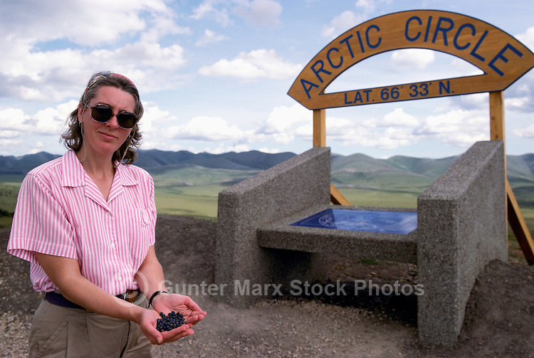 Tourist picking Blueberries at Arctic Circle, along Dempster Highway (Hwy 5), Yukon Territory, YT, Canada (Model Released)