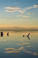 Bowhead whale Jawbones along the coast of Barter Island, Kaktovik, Alaska