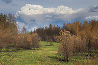 Forest fire rages near the village of Nenana, Alaska during June of 2006.