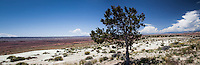 A panoramic composite, multiple images capture the vastness of Utah's central region, anchored by a single tree along I-70.