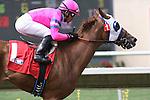 29 July 2009: Blind Luck (2yo f by Pollard's Vision) wins an allowance race under jockey Joel Rosario at Del Mar Race Track, Del Mar, CA